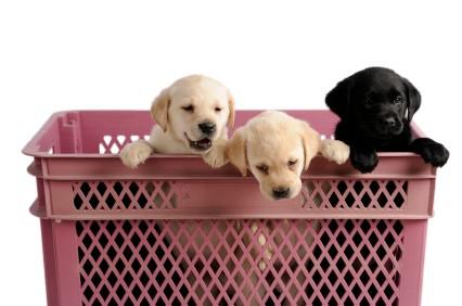 Pets in basket